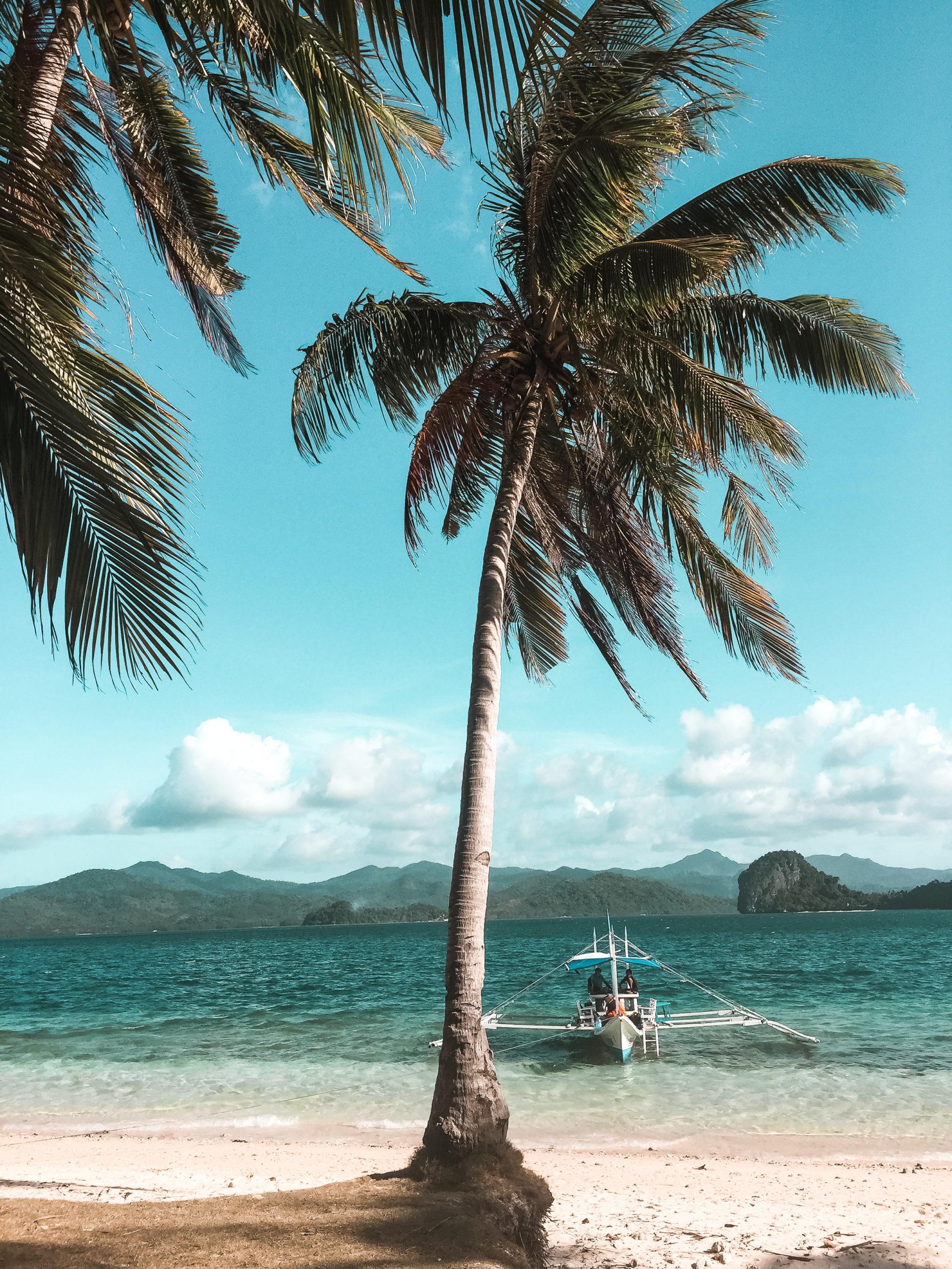 palmy na tle oceanu palawan, filipiny
