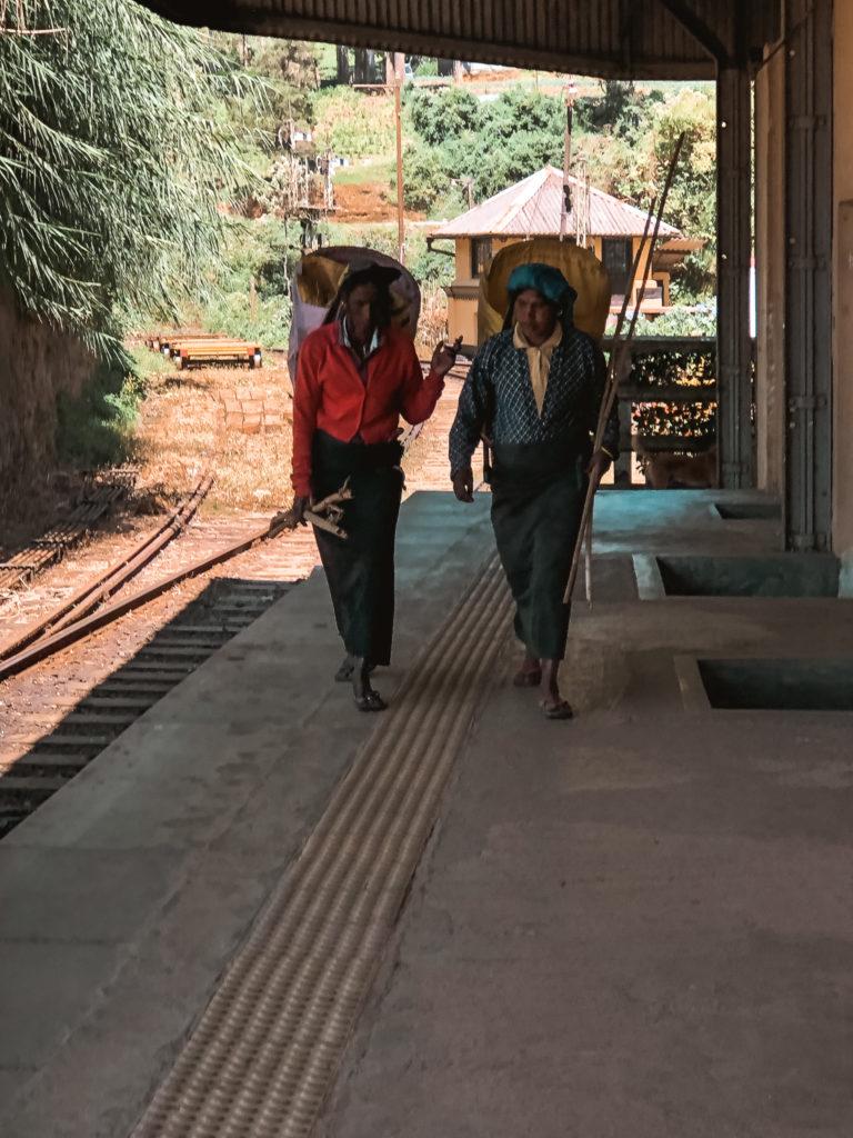 kobiety zbierajce herbate na stacji w nuwara eliya