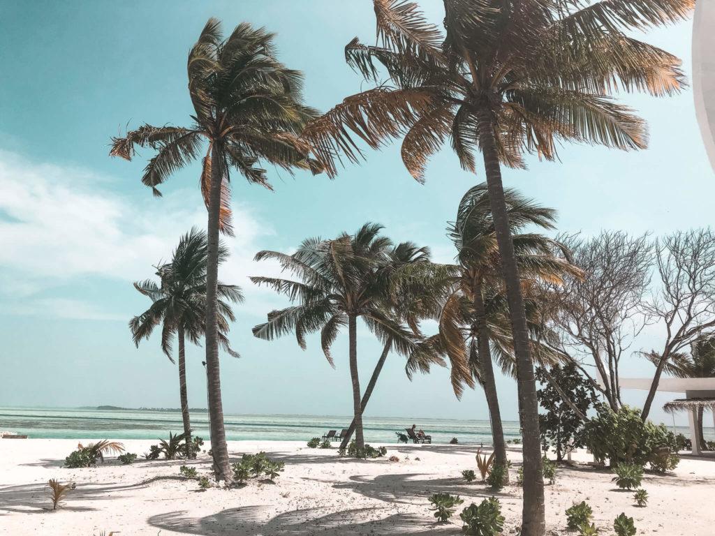 palmy na plaży Malediwy
