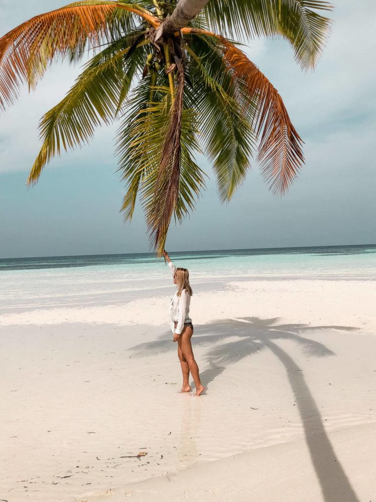 palma na plaży