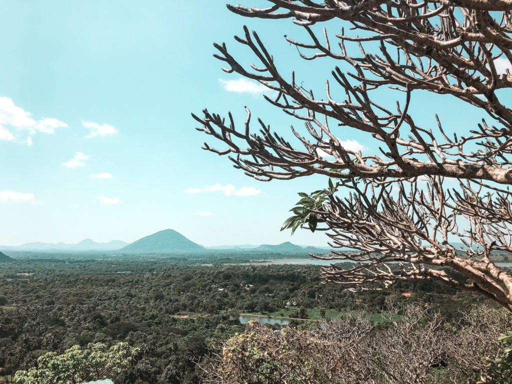 widok z góry na dambullę