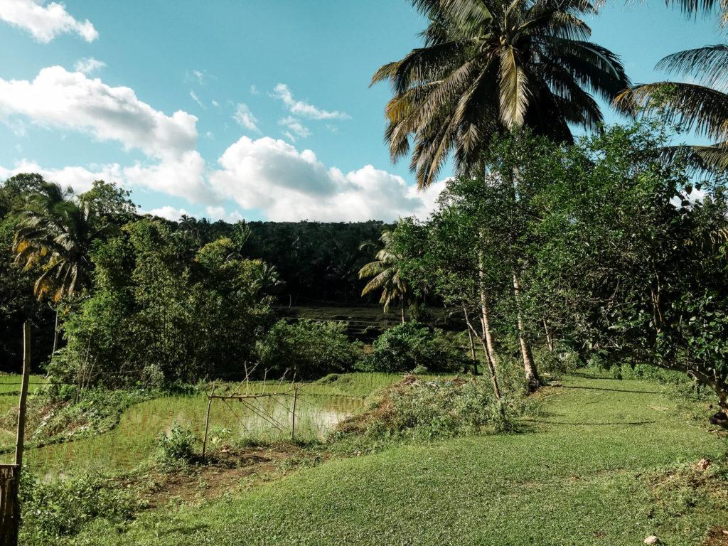 roślinność na wyspie bohol