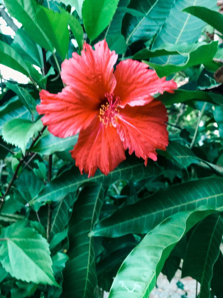 kwiaty na Sri Lance