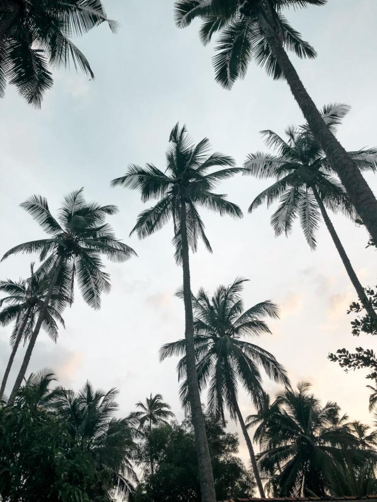 palmy Sr Lanka