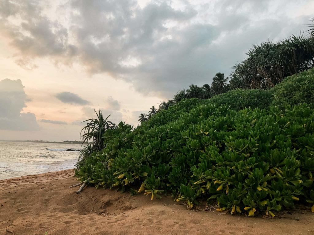 roslinność w tangalle Sri Lanka