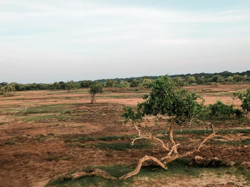 yala-national-park-sri-lanka