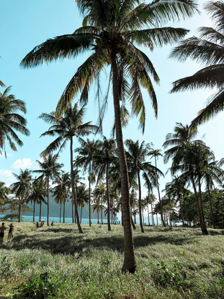 Pinagbuyutan trawy oraz palmy