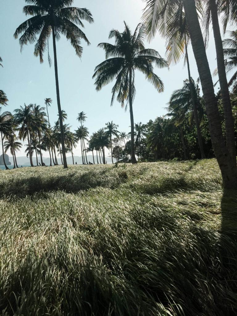 Pinagbuyutan trawy