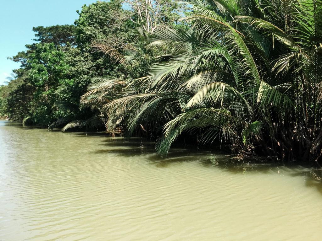 roślinność przy rzece loboc