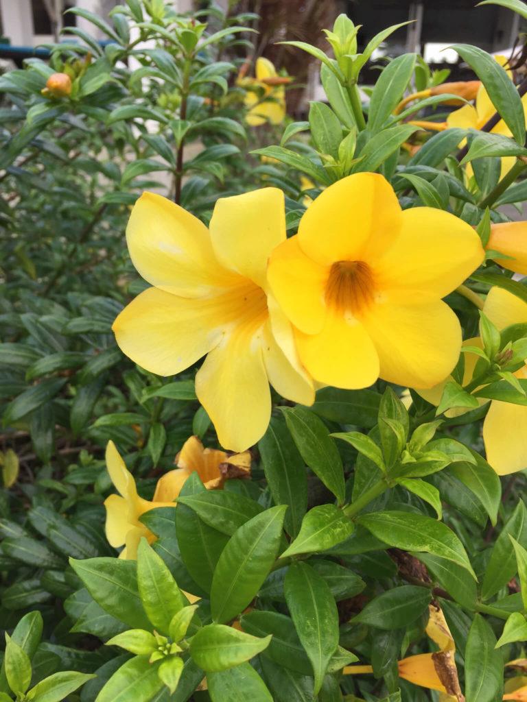 kwiaty na Boholu