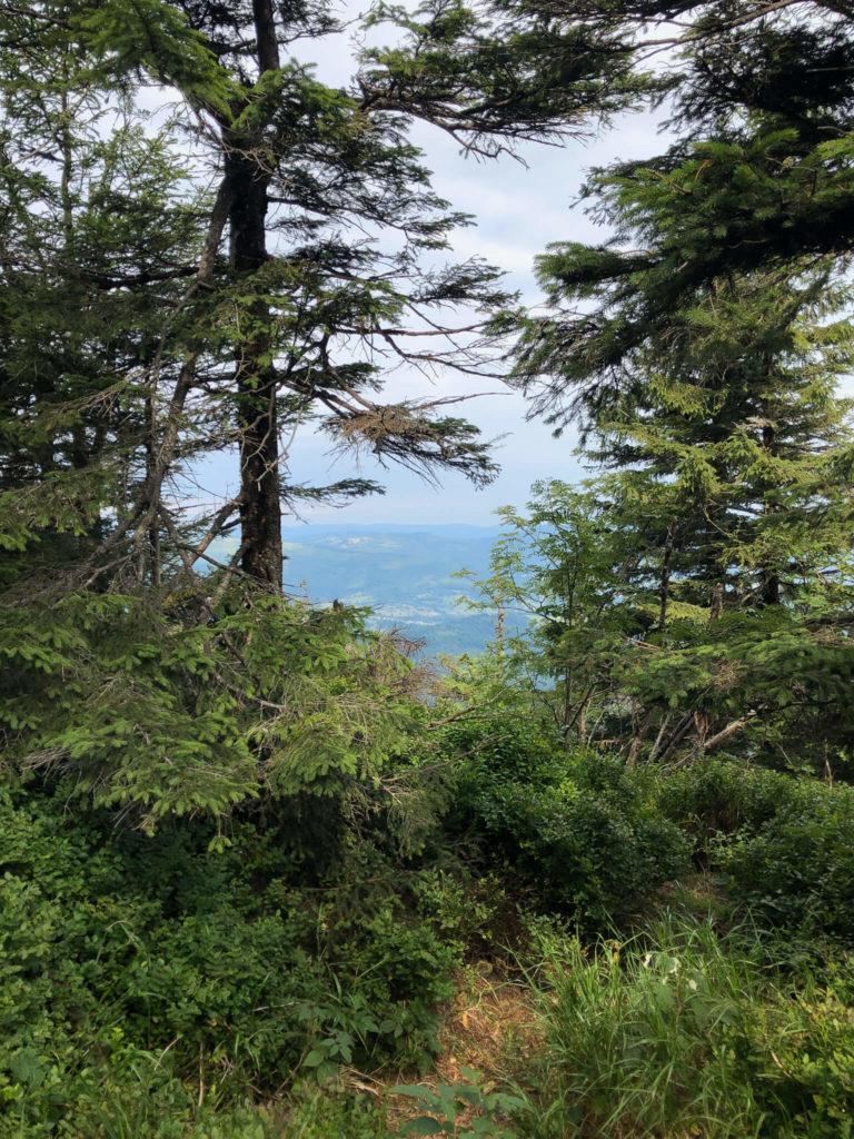 las podczas wejścia na Babią Górę