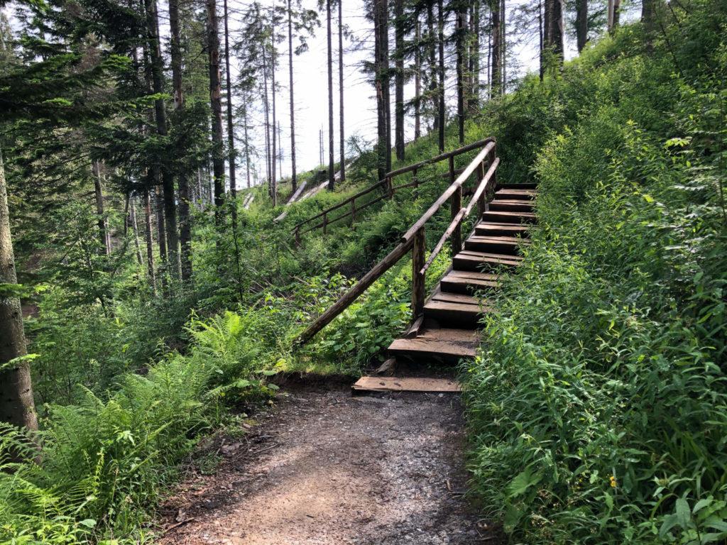 Szlak do Nosalowej Przełęczy