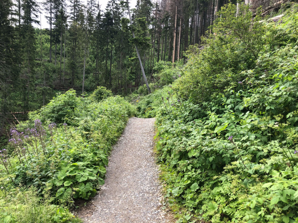 szlak na Nosalową Przełęcz